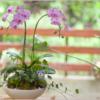 開店・開業のお花