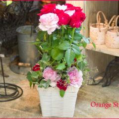 楽屋のお祝いにバラとグリーンのフラワーアレンジ